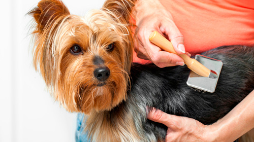 LinkspetCentre-Grooming-dog-wash