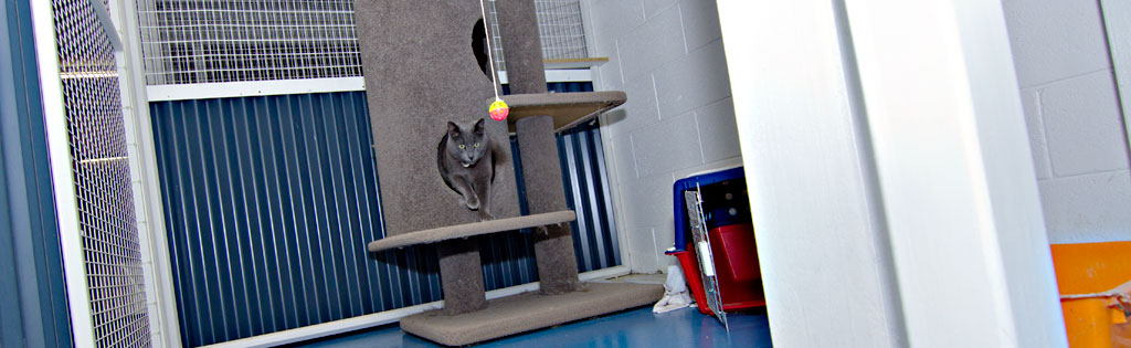Our Comfy Cattery is purrfect!
