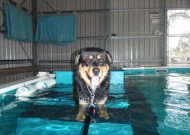 Links-aquatic-dog