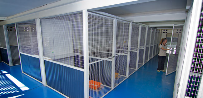 Links cattery1